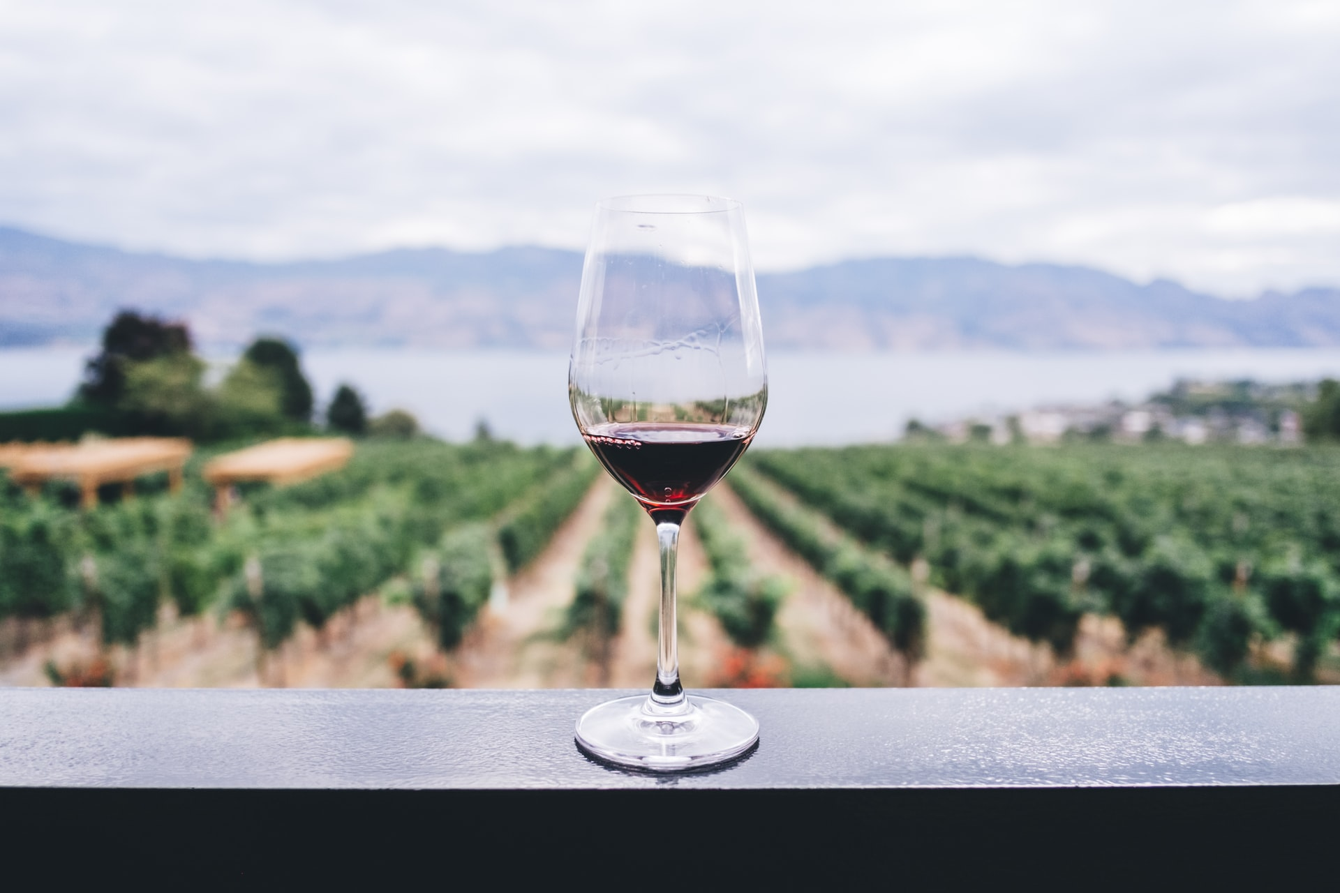 World's First Entirely Virtual Wine Launched by Eric Schmidt and Jeff Bezos