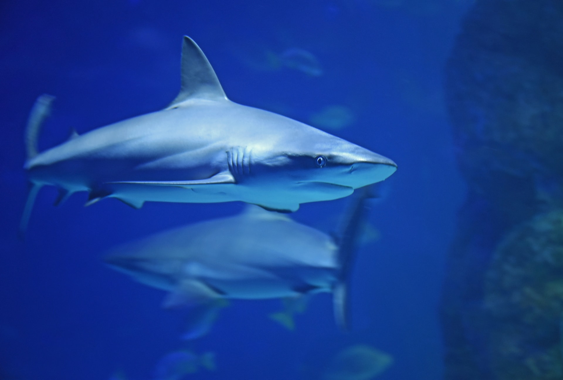 Swim with Sharks in AR at the Stockland Wetherill Park Shopping Centre